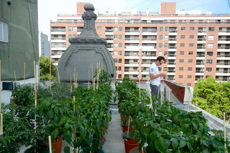 Pepper Plants and Cupula