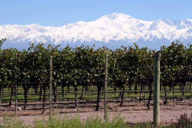 Vineyard and The Andes