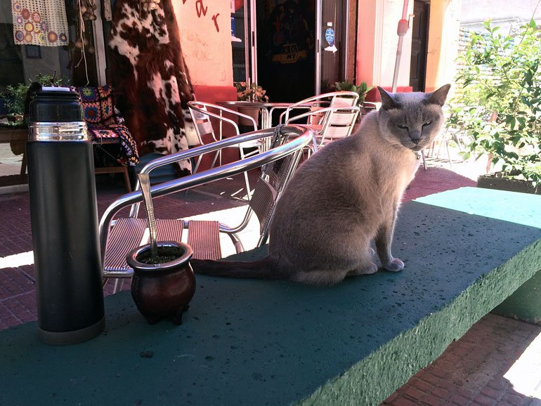 Cat with Mate